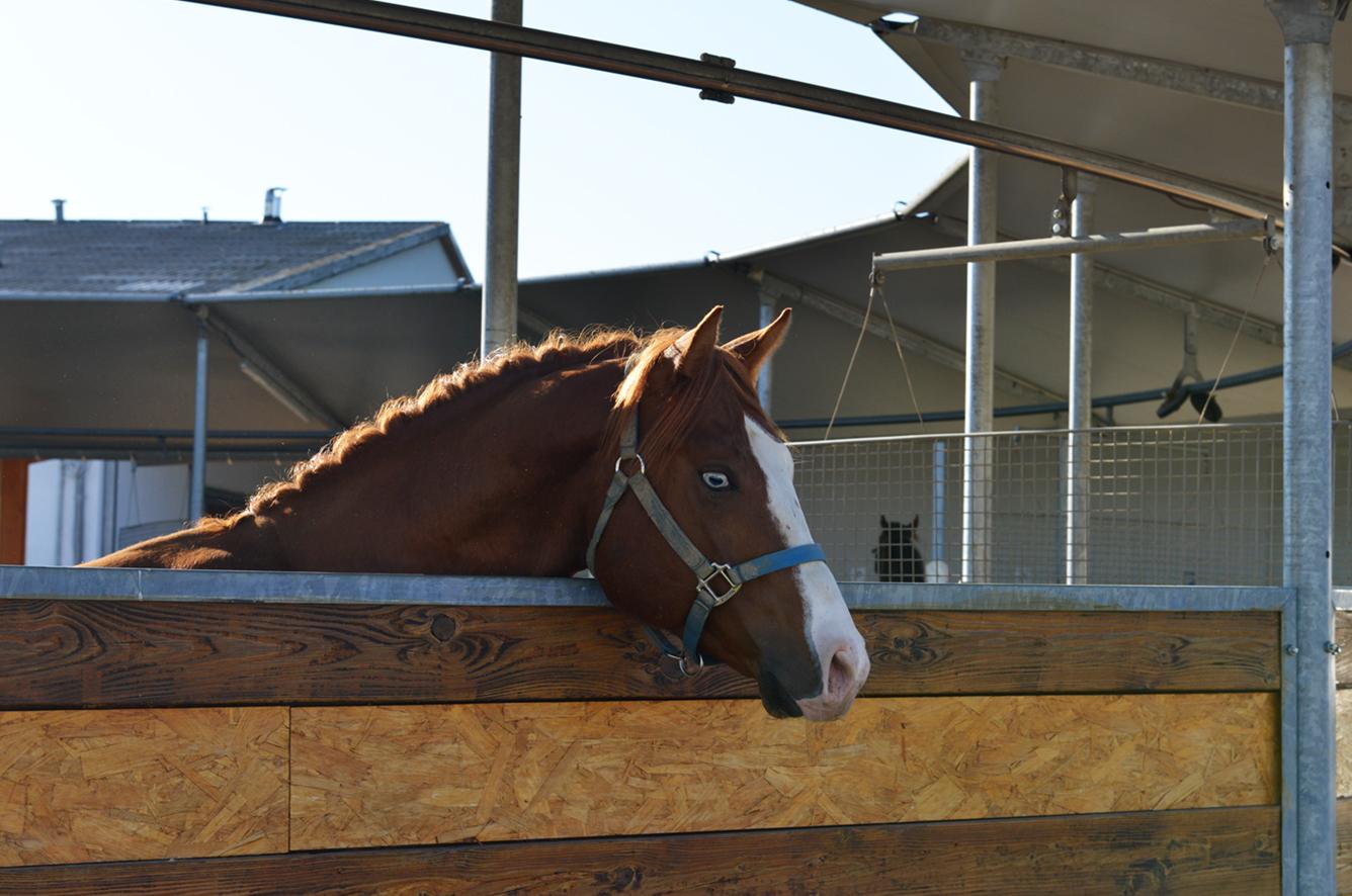 Anlage_HorseAcademy__AGA3493