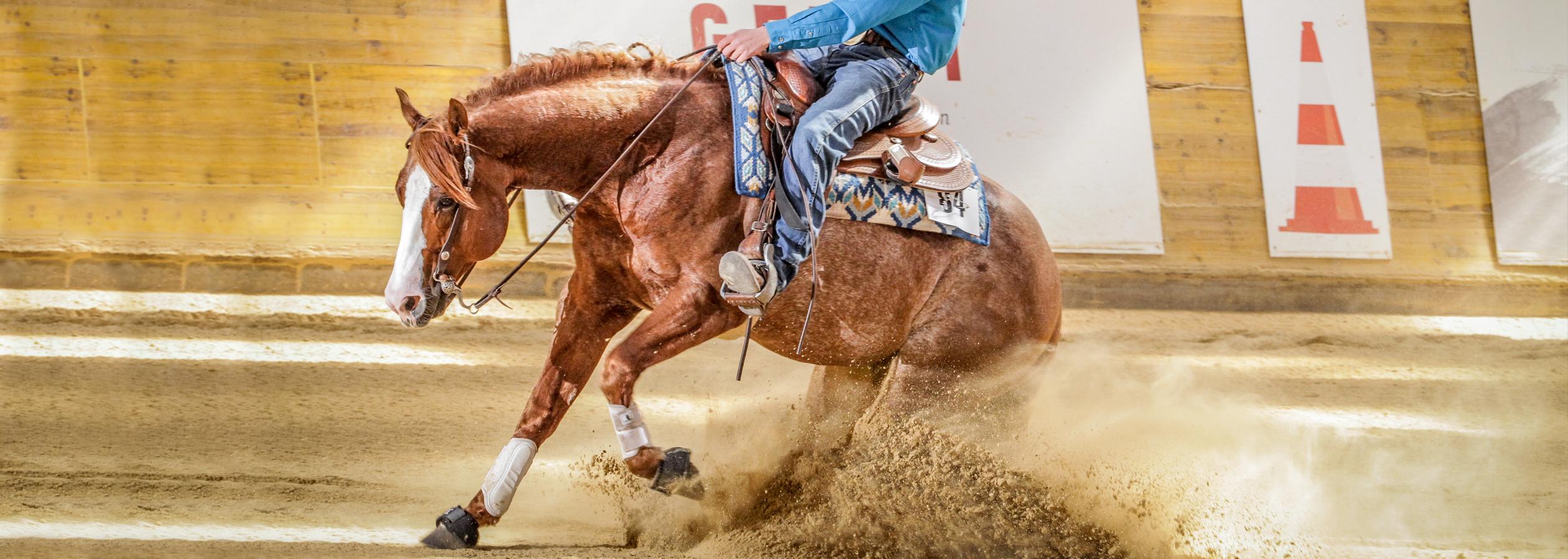 Header_HorseAcademyBON_4894