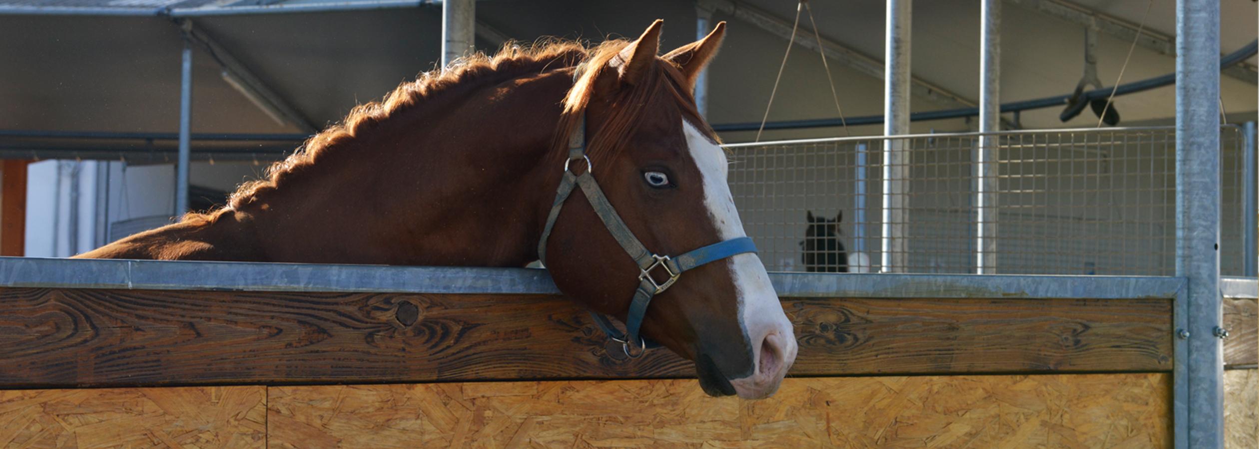 Header_HorseAcademy_AGA3493