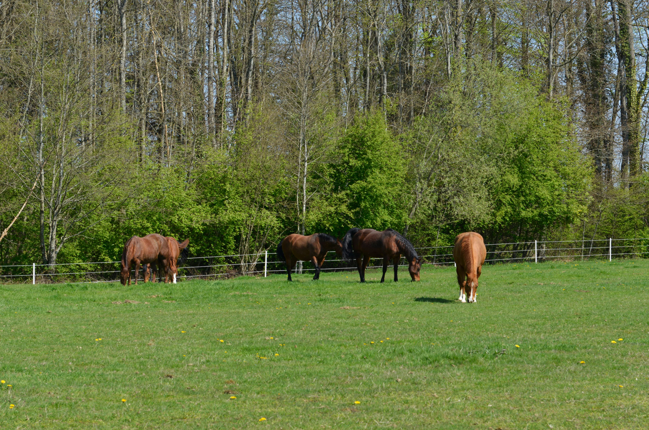 Weide_HorseAcademy_AGA3241