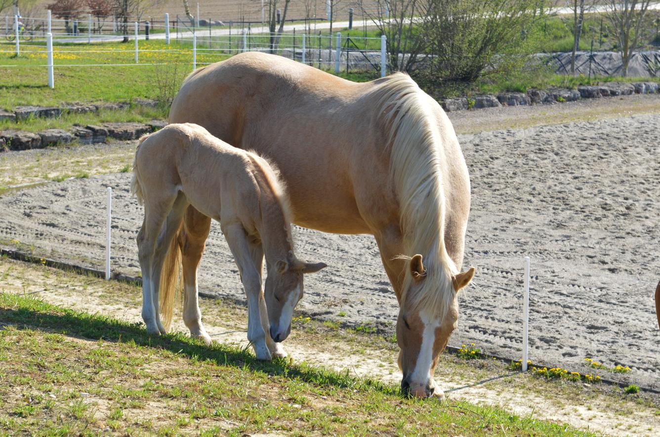 Weide_HorseAcademy_AGA3966