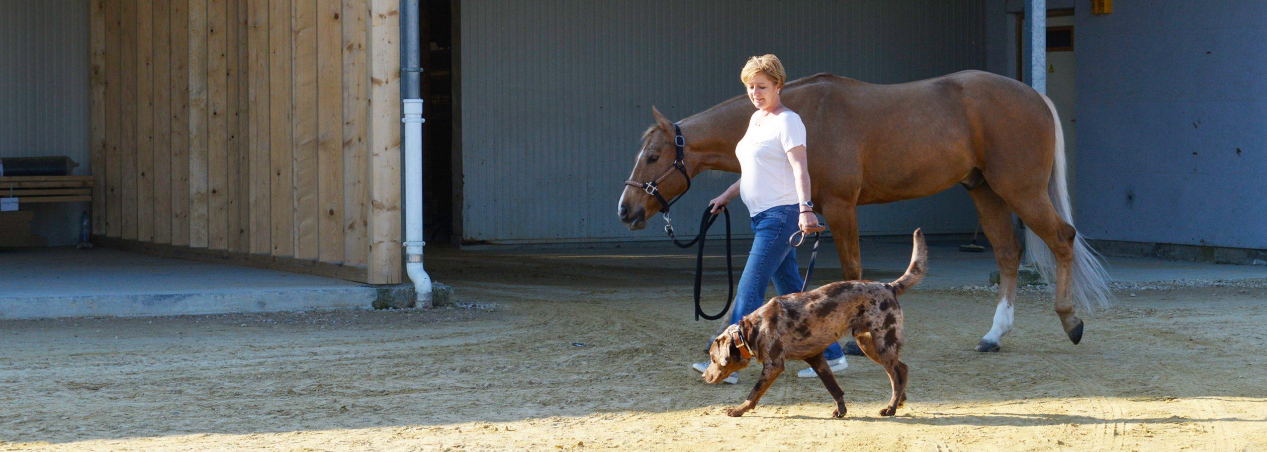 Header_HorseAcademy2