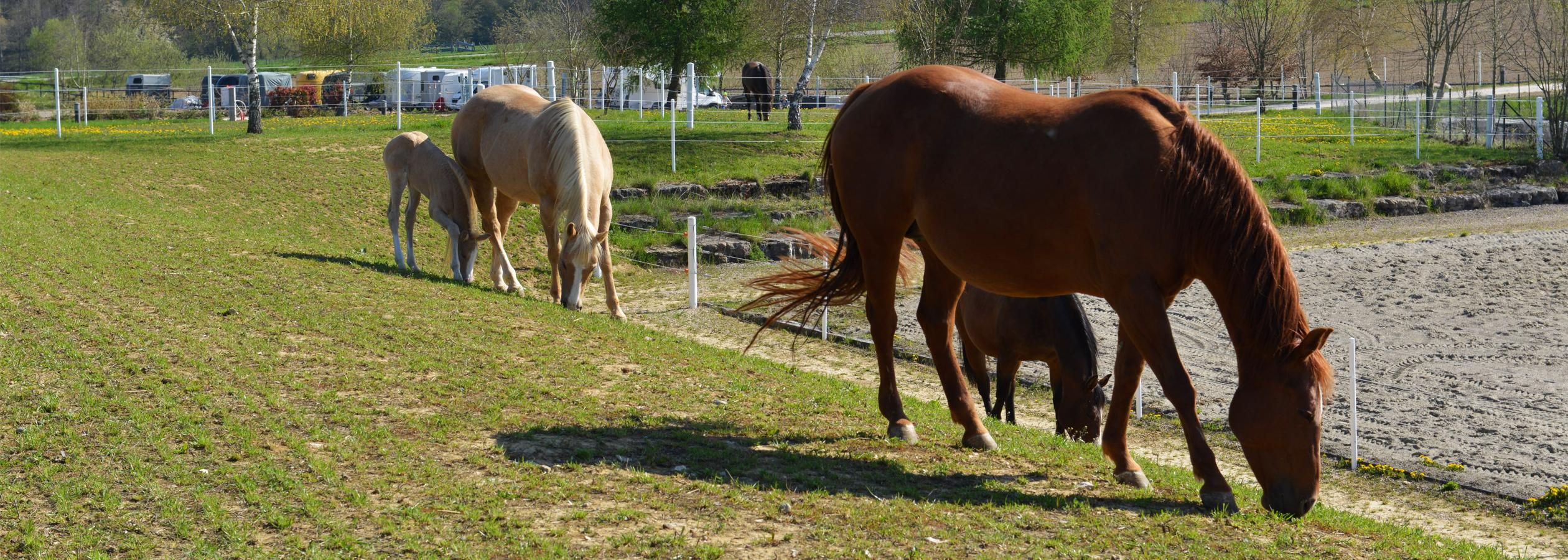 Header_HorseAcademy_Anlage-11