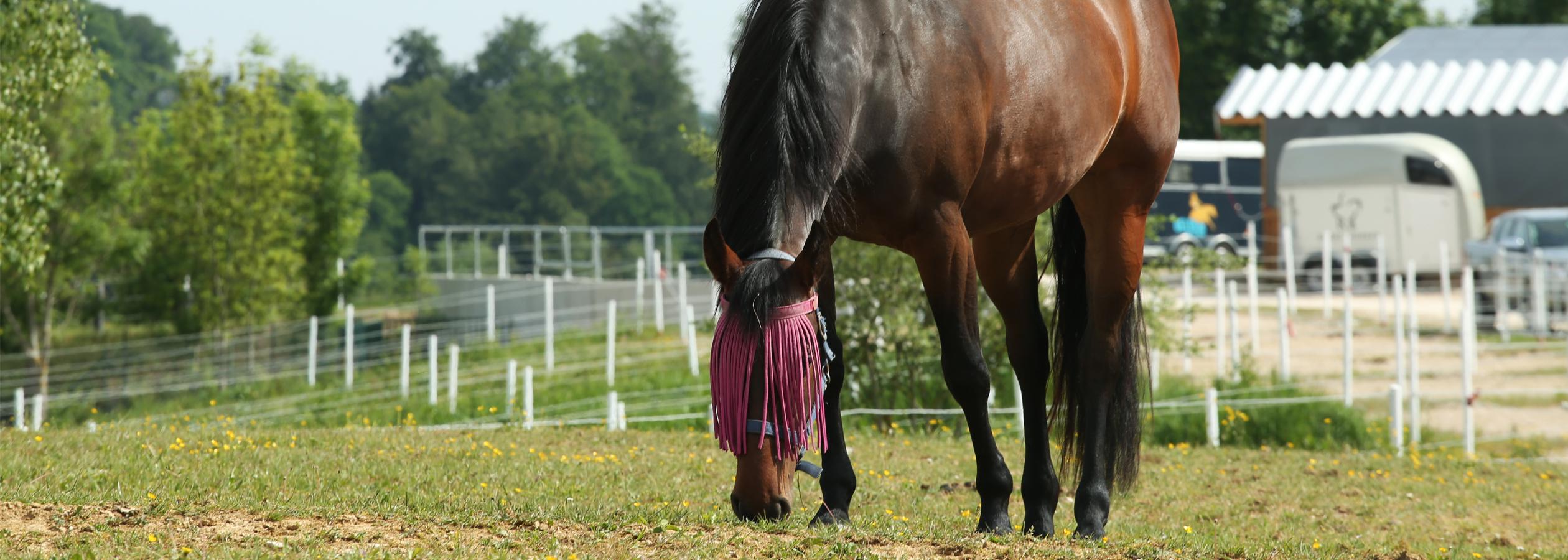 Header_HorseAcademy_Anlage-12