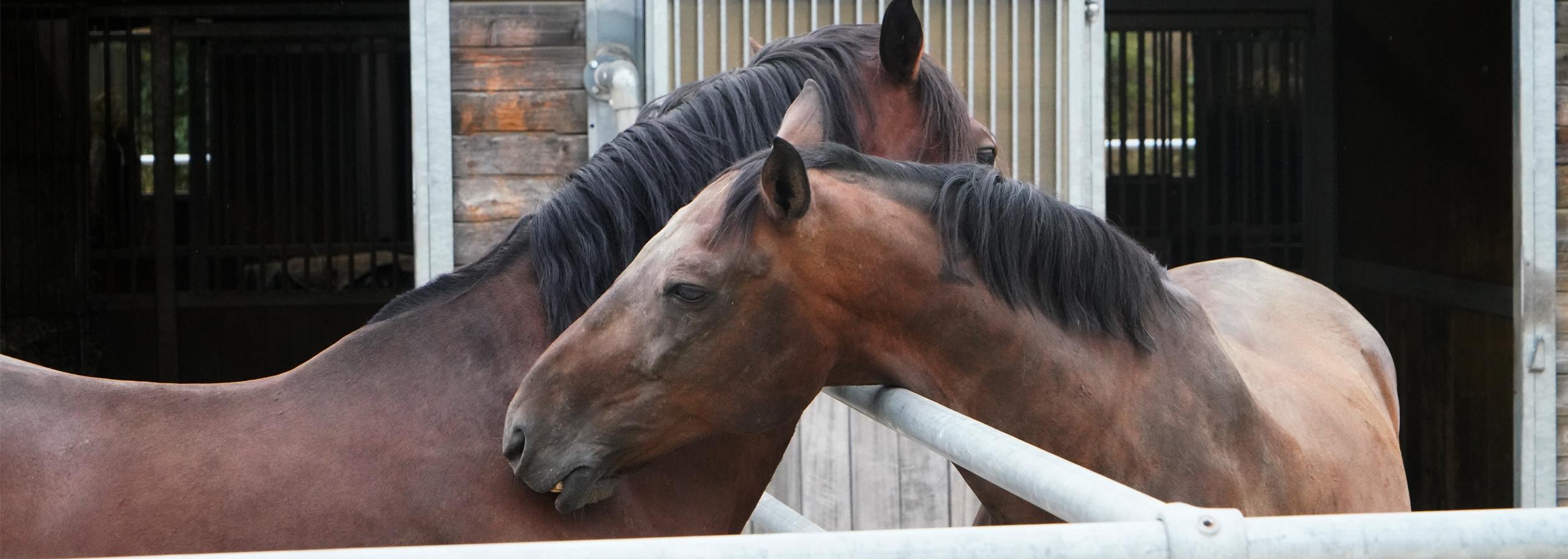 Header_HorseAcademy_Anlage-13