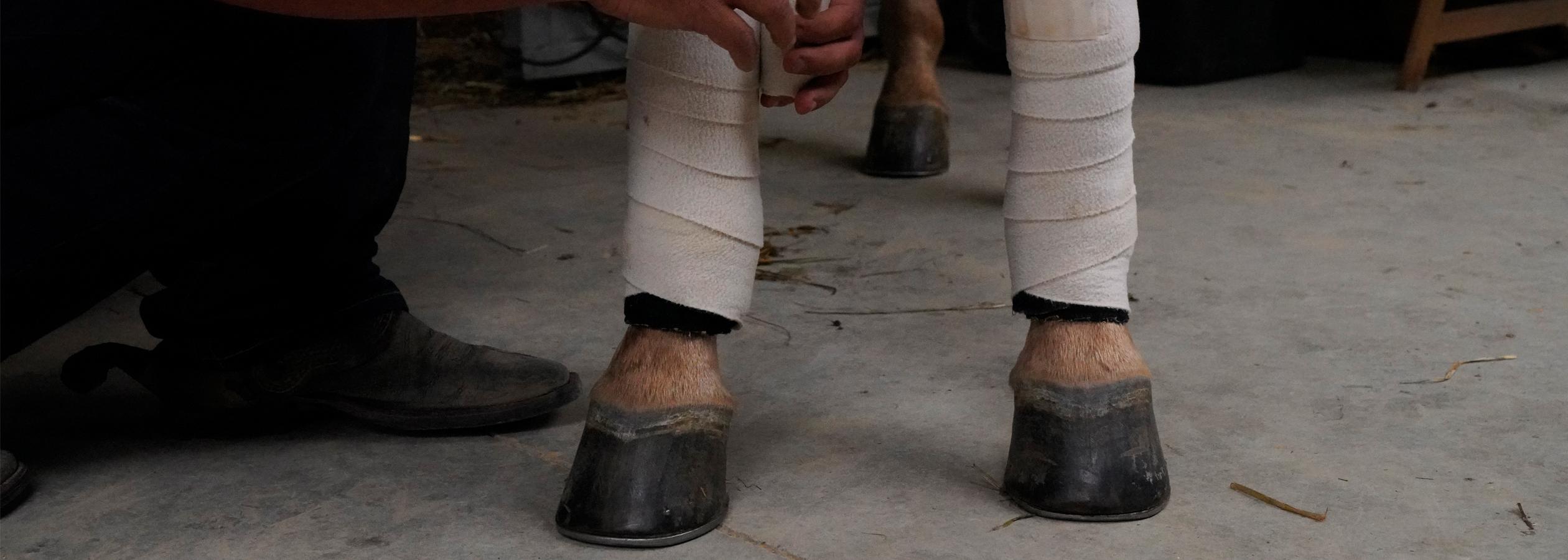 Header_HorseAcademy_Anlage-15