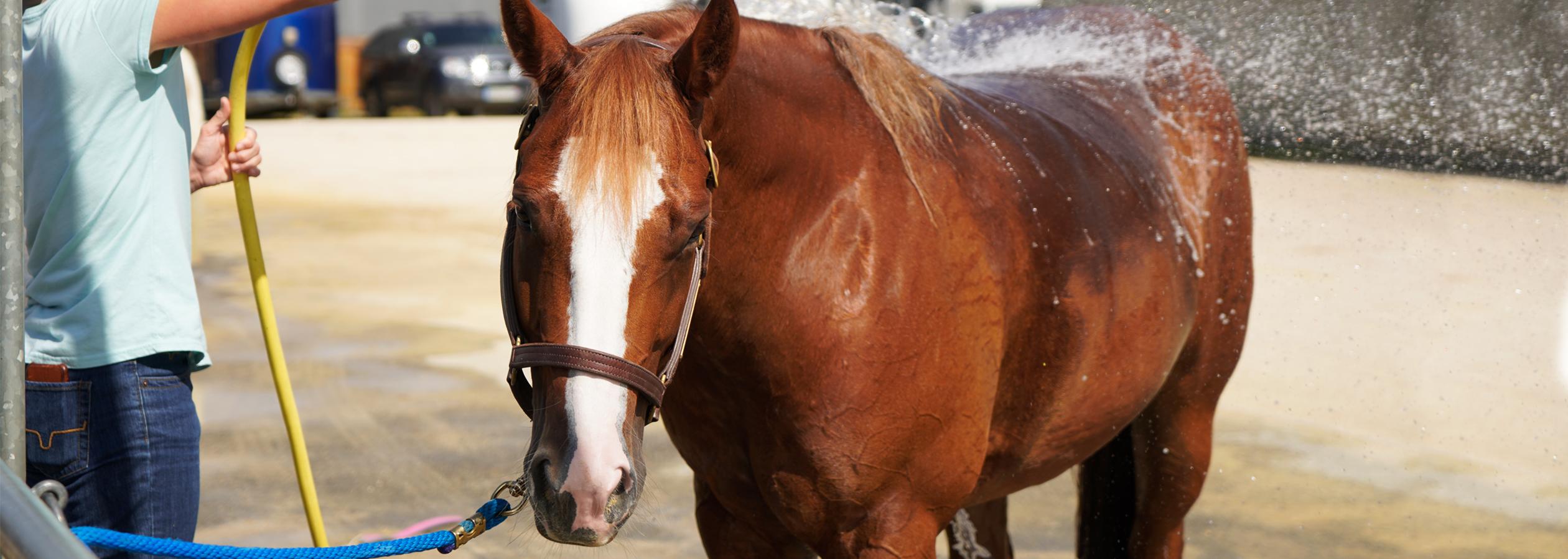 Header_HorseAcademy_Anlage-20