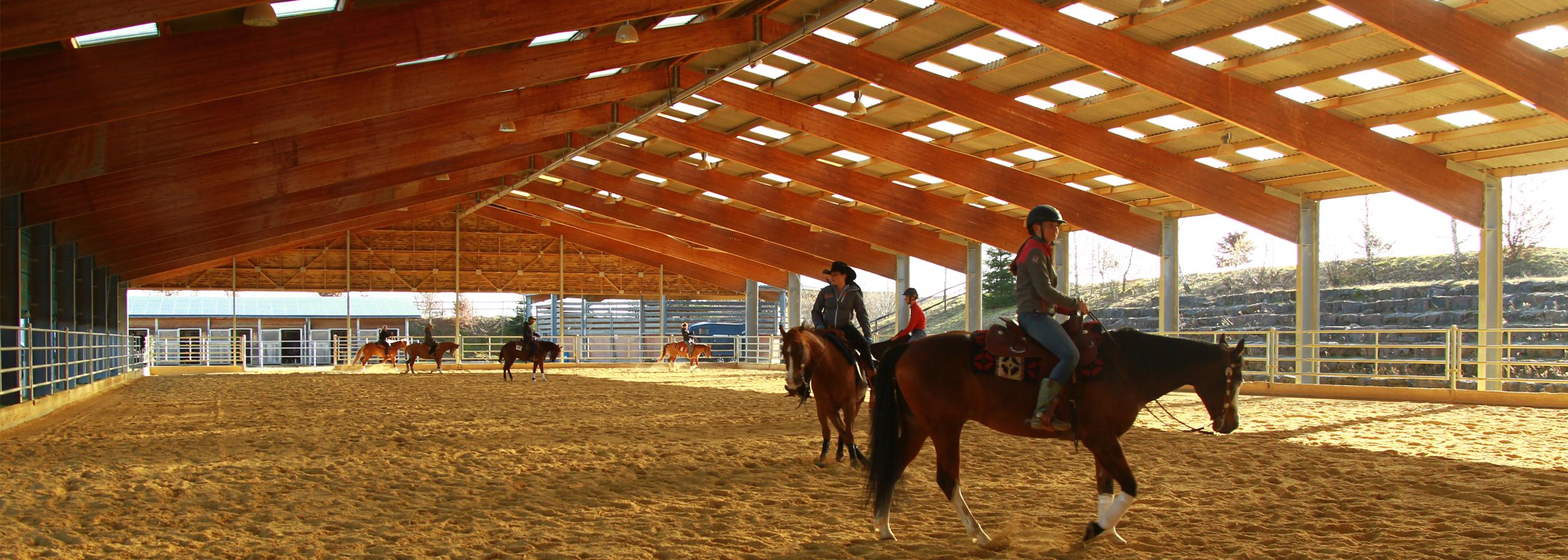 Header_HorseAcademy_Spektrum-4